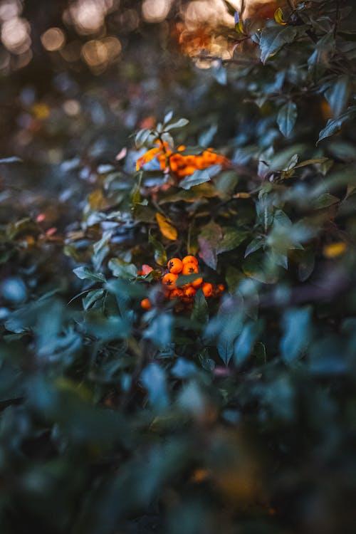 Photos gratuites de automne, bokeh, brouiller, coucher de soleil