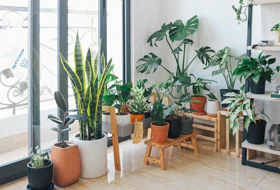 Improving Air Quality in Your Home