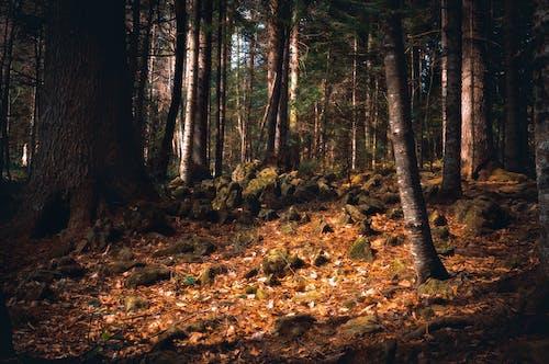 Základová fotografie zdarma na téma les, padání, příroda, stromy