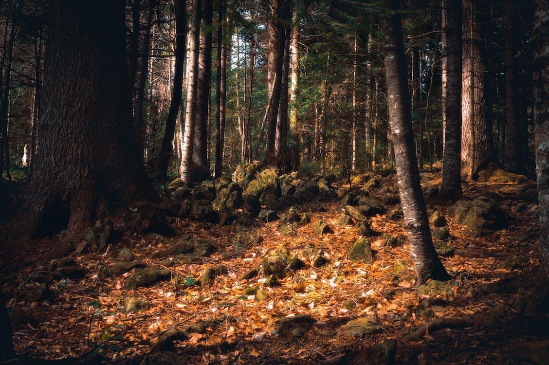 alam, hutan, jatuh