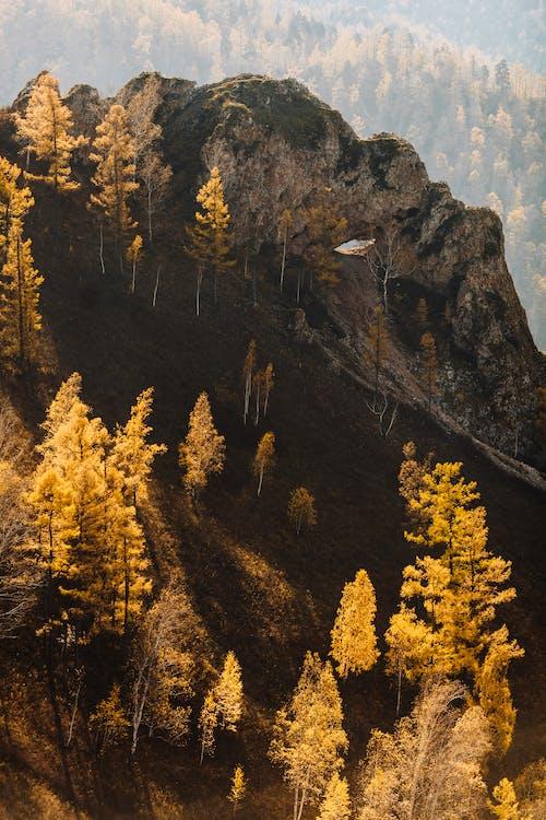 Gelbe Und Grüne Bäume Auf Berg