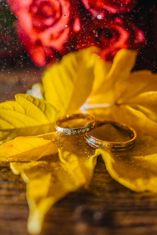 Wedding Rings On Yellow Leaves