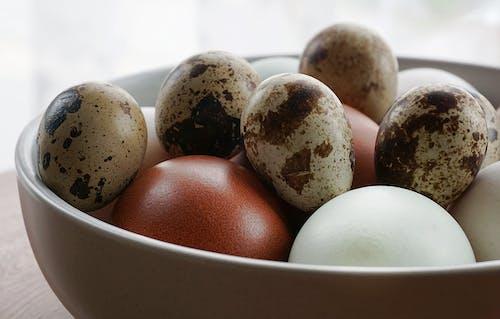 คลังภาพถ่ายฟรี ของ ขัน, อาหาร, ไข่, ไข่นกกระทา
