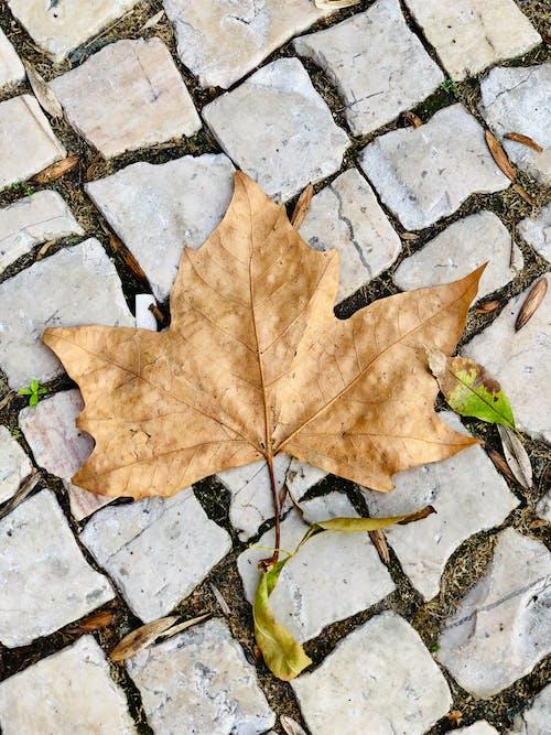 Ảnh lưu trữ miễn phí về đáng yêu, đường phố, màu mùa thu, vàng