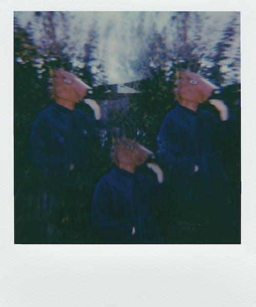 Безкоштовне стокове фото на тему «Polaroid, верхній одяг, голова тварин, група»
