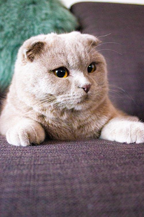 Free stock photo of cat, sofa, sweet