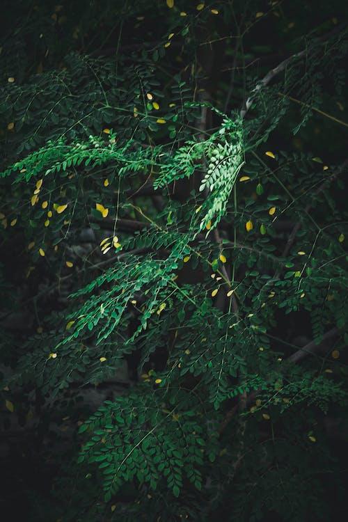 Δωρεάν στοκ φωτογραφιών με 4k ταπετσαρία, βινιέτα, δέντρα, μεγάλα φύλλα
