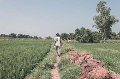 Δωρεάν στοκ φωτογραφιών με αγρόκτημα, αγροτική περιοχή, αγροτική σκηνή, αγροτικός