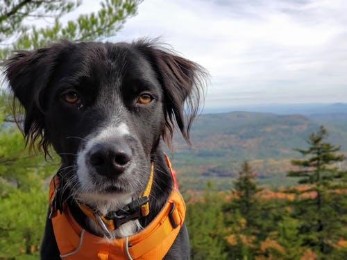 Free stock photo of autumn color, autumn mood, black dog, rescue dog