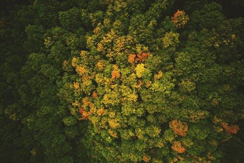 Δωρεάν στοκ φωτογραφιών με από πάνω, δασικός, δέντρα, εναέρια λήψη