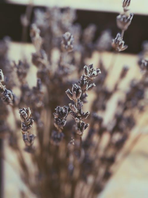 植物群, 綻放, 花, 花瓣 的 免費圖庫相片
