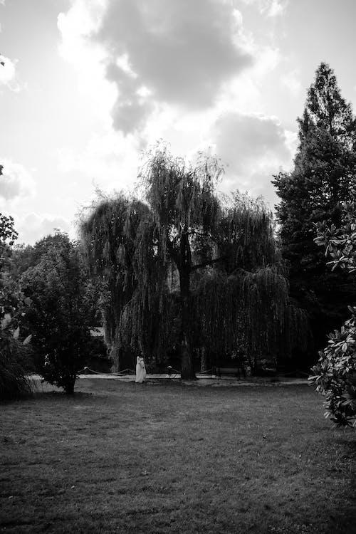 光, 公園, 原本, 場景 的 免费素材照片