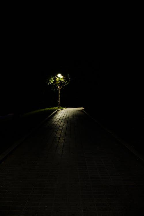 光, 圖案, 夏天, 天性 的 免费素材照片
