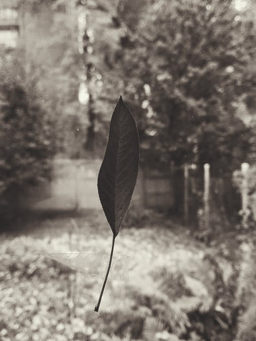 Black And White Photo Of Leaf