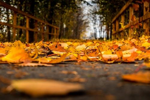 Ingyenes stockfotó alacsony szögű felvétel, alacsony szögű fényképezés, lehullott levelek, ősz témában