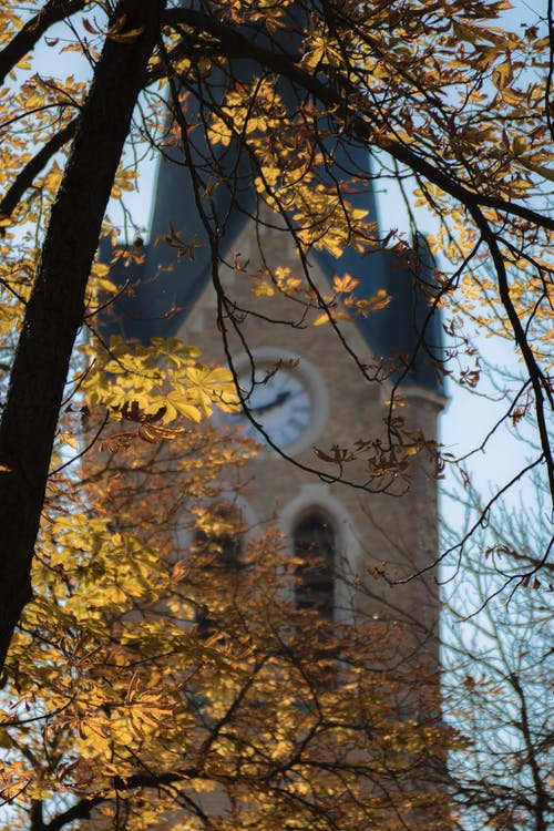 Free stock photo of autumn, church, coors light, gold