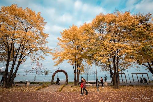 Free stock photo of autumn, sky, tree