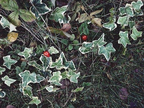 Bahçe, bitkiler, çalı meyveleri, doğa içeren Ücretsiz stok fotoğraf