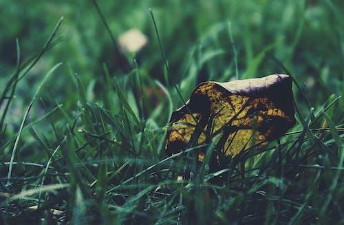 çim, çim bıçakları, doğa, güz içeren Ücretsiz stok fotoğraf