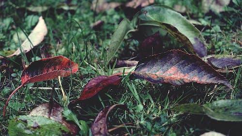 çim, yapraklar, yeşil çim içeren Ücretsiz stok fotoğraf
