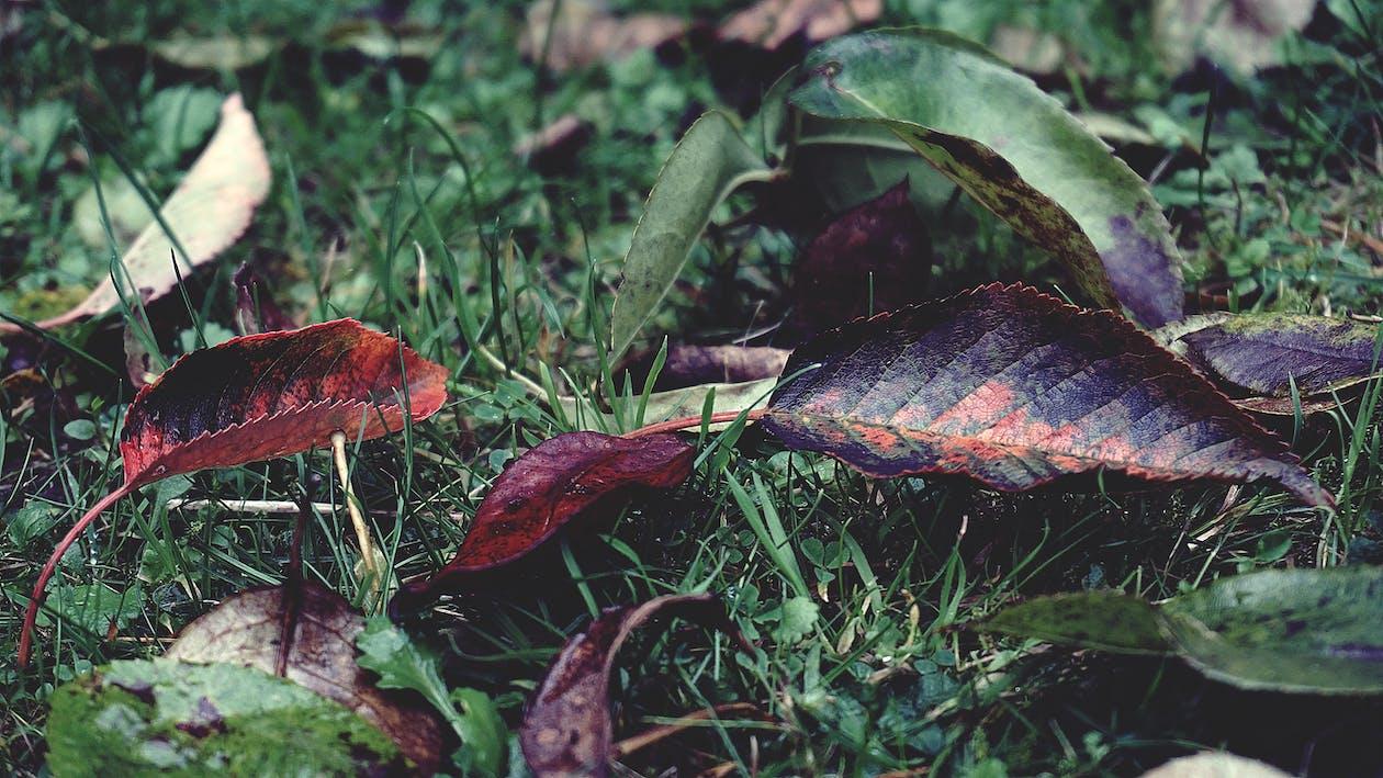 listy, tráva, zelená tráva