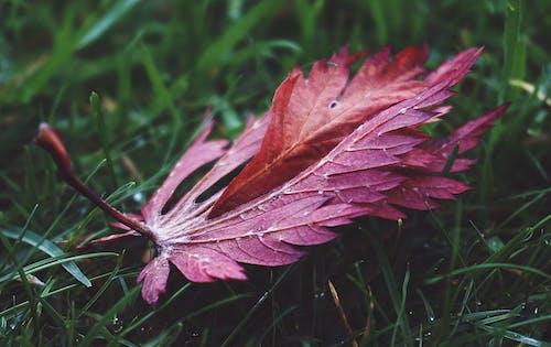 Immagine gratuita di erba, erba verde, foglia, giardino