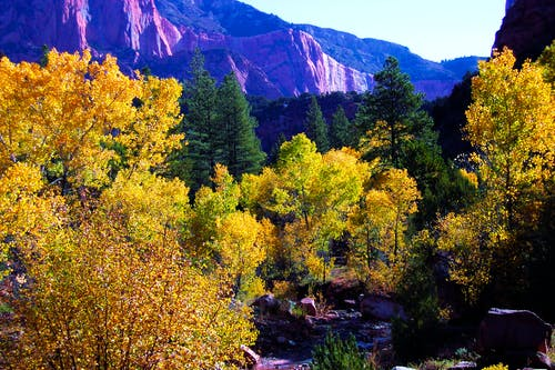 Gratis stockfoto met herfst kleur, herfstbladeren, herfstbos, herfstkleuren