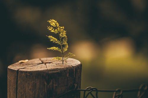 Immagine gratuita di albero, ceppo, ceppo di albero, crescere