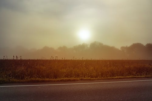 Ảnh lưu trữ miễn phí về bối cảnh, buổi sáng, cánh đồng, cây