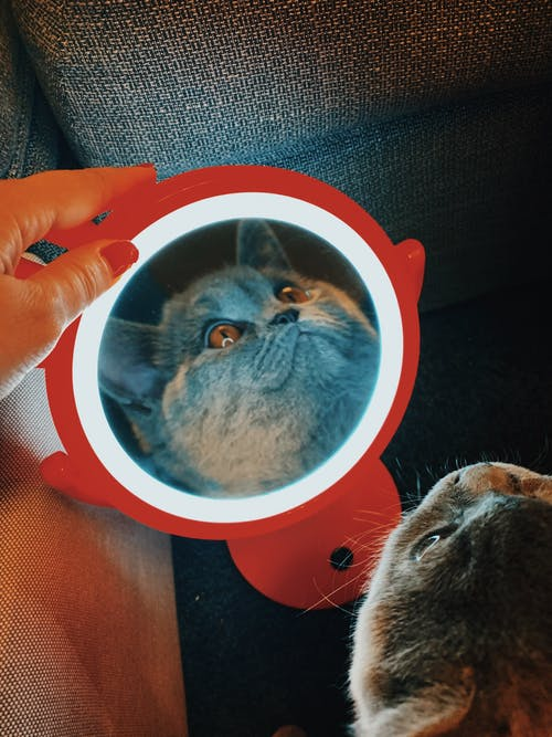 Reflection Photo of Cat