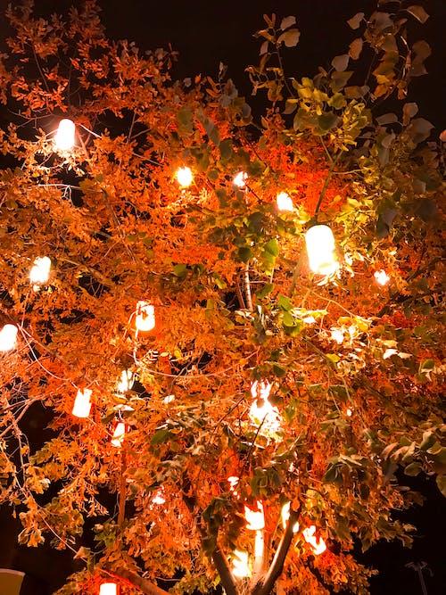 Ingyenes stockfotó az ősz színei, dekoráció, éjszakai fények, élénk színű témában