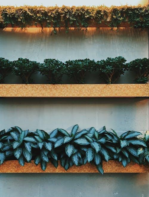 Ilmainen kuvapankkikuva tunnisteilla asetelma, kasvikunta, kasvit, koristelu