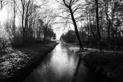 Foto stok gratis air, alam, hitam dan putih, hutan