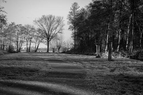 Foto stok gratis hitam dan putih, hutan, jalan kecil