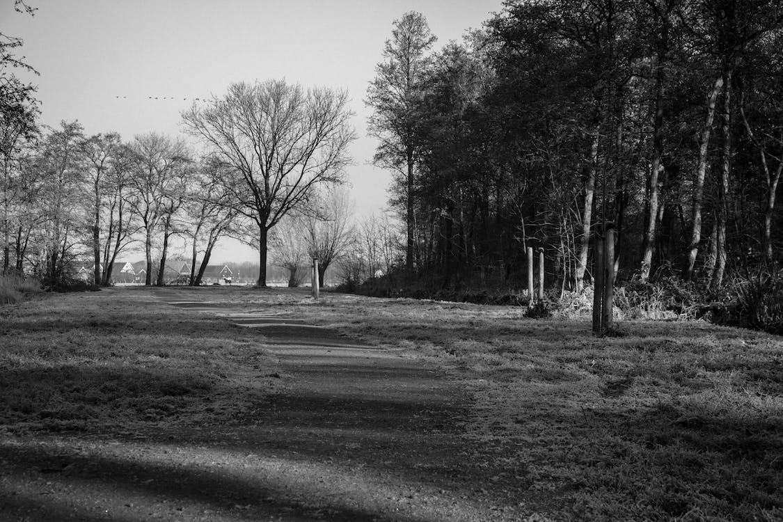 hitam dan putih, hutan, jalan kecil