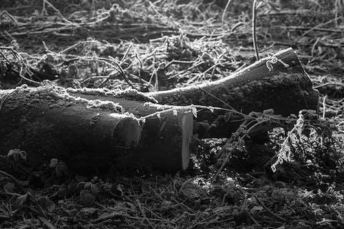 Δωρεάν στοκ φωτογραφιών με ασπρόμαυρο, δασικός, κορμός δέντρου, φύση