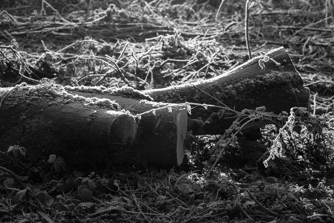 alam, batang pohon, hitam dan putih