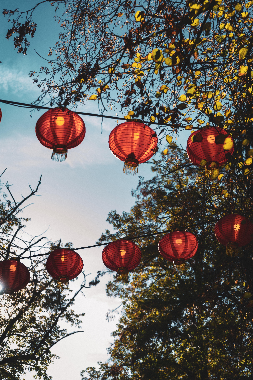 Paper Lanterns Hanging Near Trees Free Stock Photo