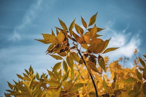 bitki örtüsü, büyüme, dal, Desen içeren Ücretsiz stok fotoğraf