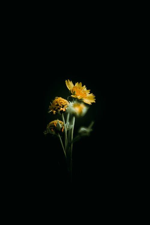 Immagine gratuita di bel fiore, retroilluminazione, sfondo 4k, sfondo nero