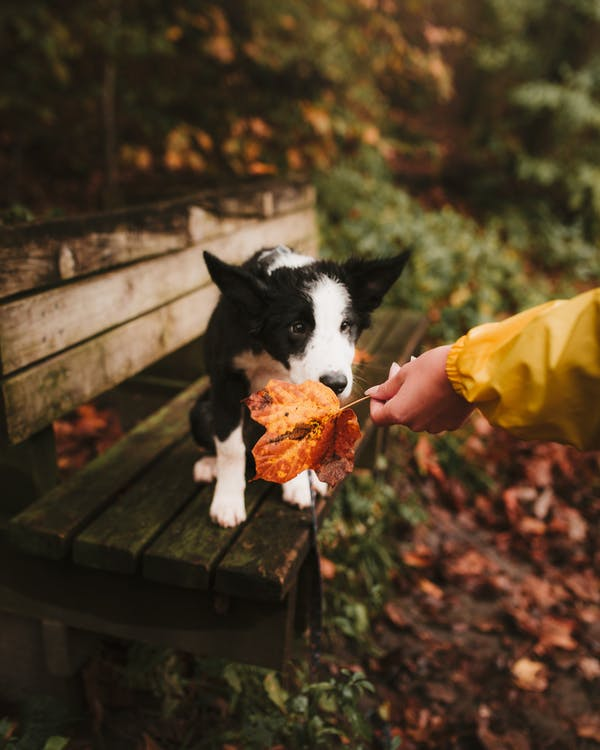 Dog Smelling Leaf