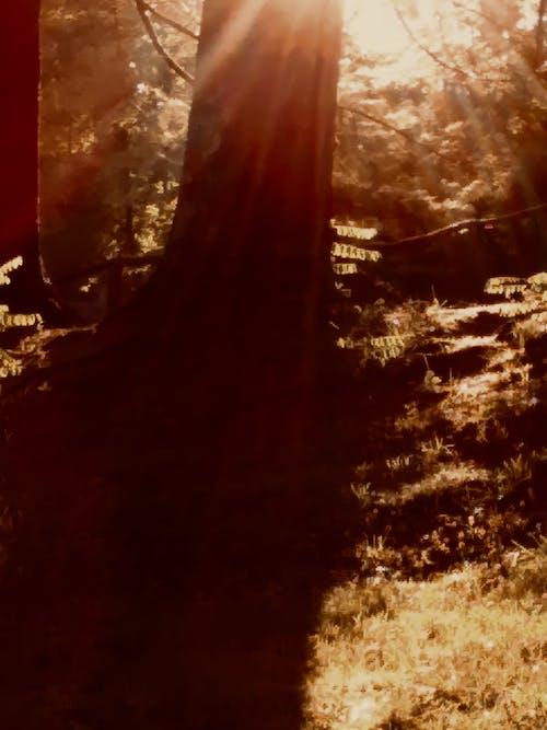 Fotobanka sbezplatnými fotkami na tému farby jesene, jeseň, jesenné listy, lesy