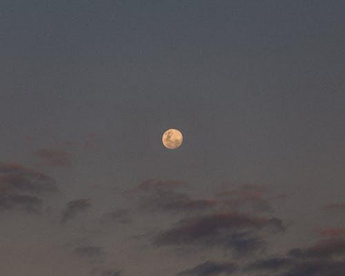 Free stock photo of blood moon, moon