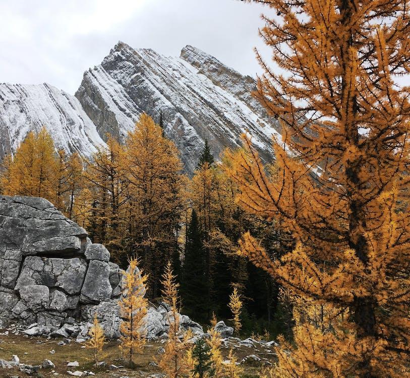 bäume, berg, berggipfel