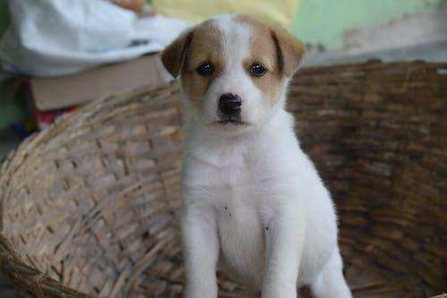 Fotos de stock gratuitas de adorable, amigo, animal, canino