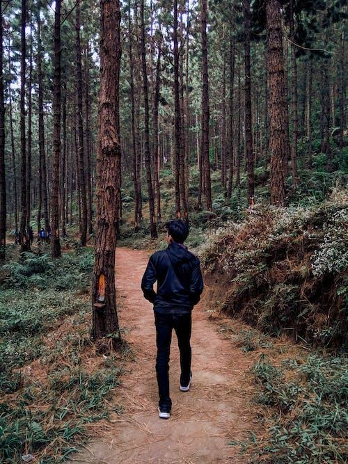 Imagine de stoc gratuită din codru, Indonezia, mers pe jos, natură