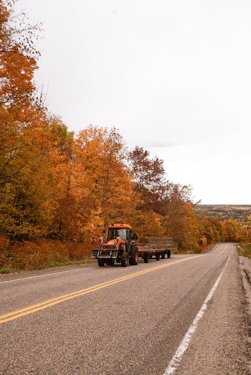 alberi, asfalto, automobile