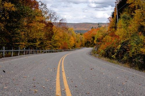 Fotos de stock gratuitas de arboles, asfalto, caer, carretera