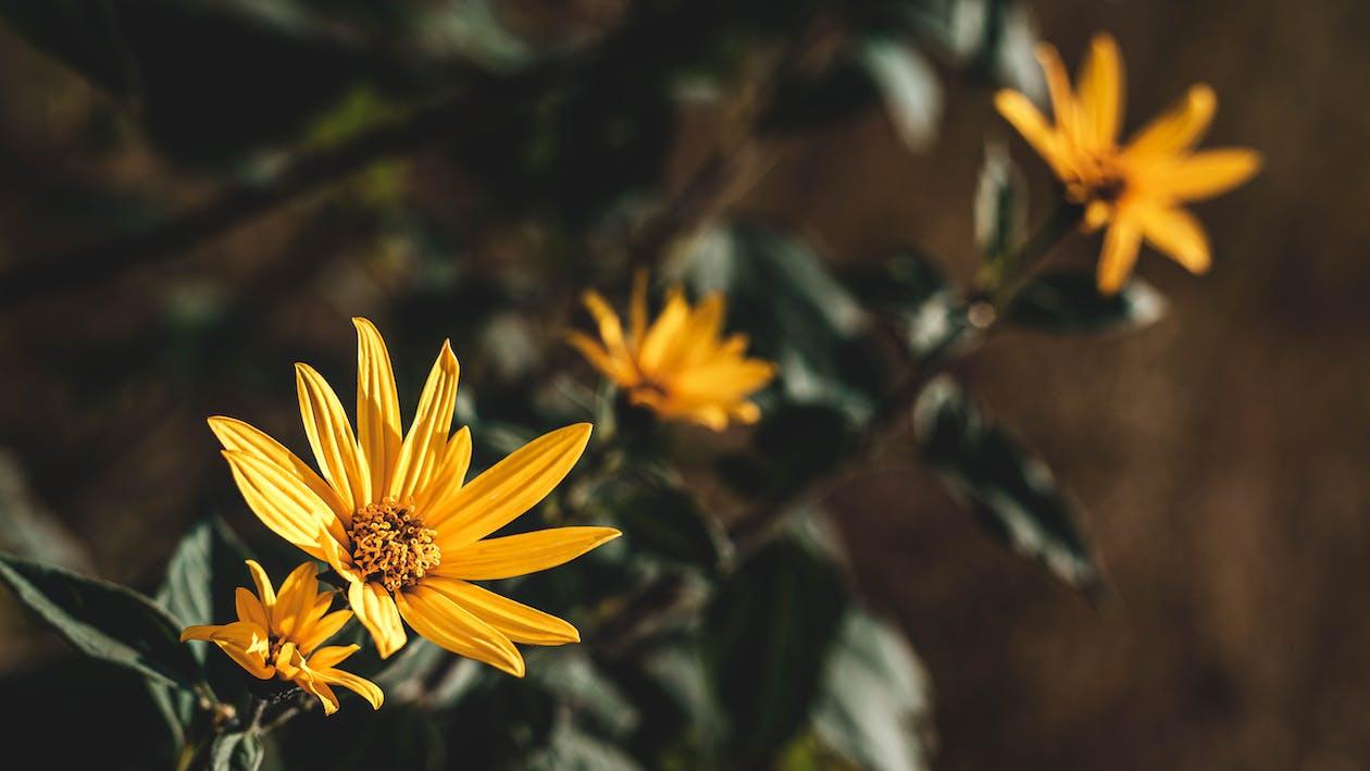 flora, flores, flores amarelas