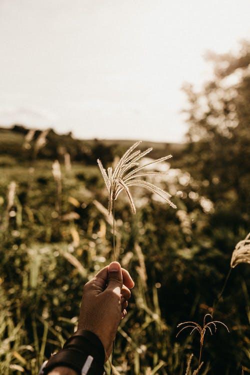 Gratis lagerfoto af afgrøde, agerjord, bane, dagslys